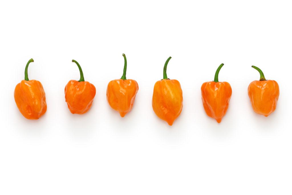 Scharfe Habanero Chilis