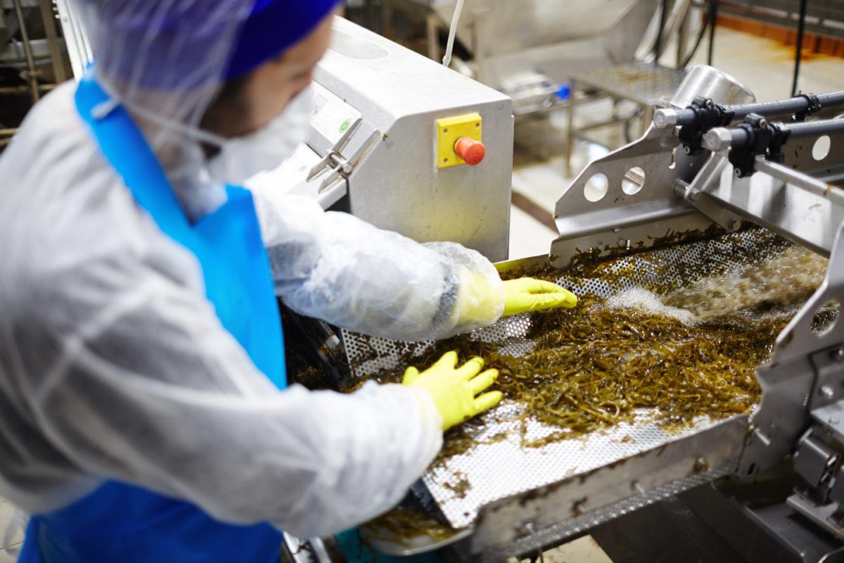 Herstellung von getrockneten Algen